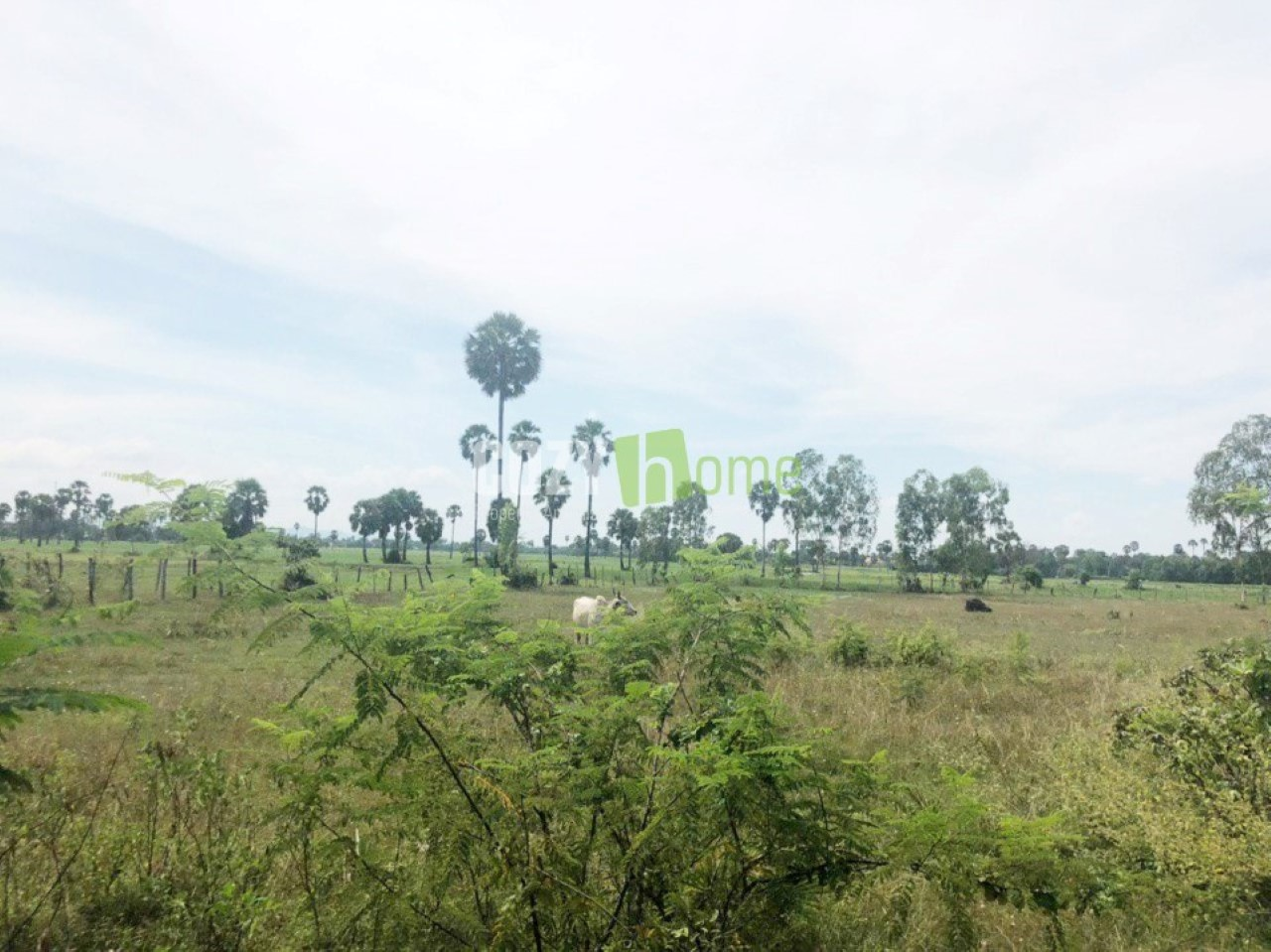 PADDY LAND FOR SALE